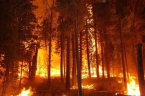 A wildfire ravages trees in the Okanagan in 2009